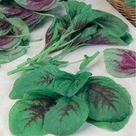 Asian Chinese  Spinach vegetable,  EDIBLE GREEN  AMARANTH : 6000 seeds (5g)