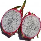 "(5) WHITE FLESH DRAGON FRUIT,PITAHAYA CUTTING 11''-13""(not yet rooted)."