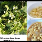 White Hyacinth Bean Seeds,Dolichos lablab,for planting or cooking 100-5000 seeds