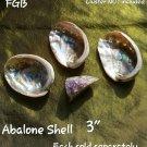 """ADD 3"""" inch small Abalone shell"""