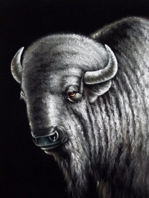 Buffalo black velvet oil painting, 18 by 24 inches, 100% handpainted.