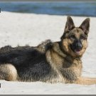 German Shepherd Dog  Metal License Plate Tag Made in America