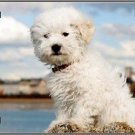 Bichon Frise Dog  Metal License Plate Tag Made in America