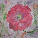 Poppy Burst limited edition print