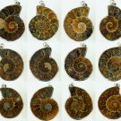 1pcs Million Years Old Madagascar Ammonite Conch Sea Snail Whelk Fossil Pendant