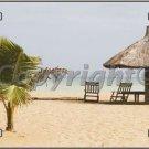 Tropical Beach Setting Vanity Metal Novelty License Plate