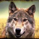 Wolf Novelty Metal License Plate