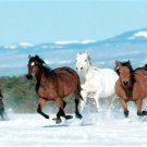 Horses Running In Snow Photo License Plate