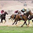 Horse Race Jockey Novelty Metal License Plate