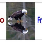 Hello Freedom With Eagle Photo License Plate