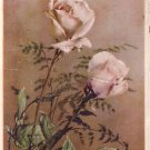Cream roses, French greetings card 1930