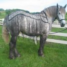 Whole Horse Fly Net - Miniature Horse Size