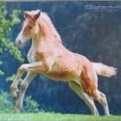 Haflinger Foal Mouse Pad