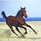 Arabian Foal Horse Mouse Pad