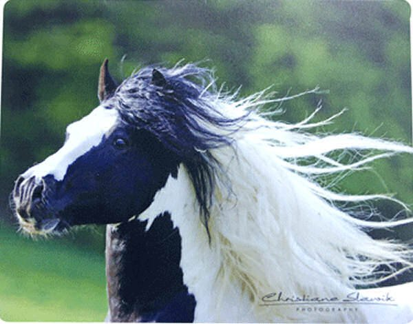 Gypsy Horse Mouse Pad