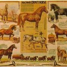 Laminated Draft Horse Poster