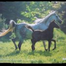 Arab Mare and Foal Mouse Pad