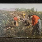 "Vintage Black Americana Postcard  ""Picking Cotton in Alabama"" Unused Split Back"