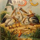 Father Tuck's Bird ABC #1472 Vintage Book  Published Circa 1890   Good Condition