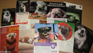 10 Different* Ad Pages/Advertisements Picturing Pug Dog Pet Animals~Soooo Cute!