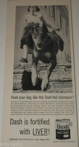 Doberman Pinscher Dog Champion Ad~Ernharkenburg Stormso