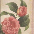New Peony Greeting Cards or Notecards - 8 Pack