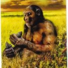 2011 Topps Allen and Ginter Ascent of Man #AOM22 Homo Habilis