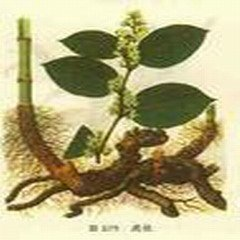 Polygonum cuspidatum Extract Powder--Powder Extracted from Polygonum cuspidatum