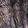 White willow bark Extract/Salix alba/Salicin 15%,20% HPLC