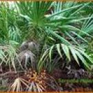 Saw Palmetto Berry Extract Powder Total Fatty Acids