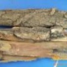 White Willow Bark P.E Salicin 20%