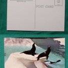 SEA LIONS SAN DIEGO ZOO CALIFORNIA OLD VINTAGE POSTCARD