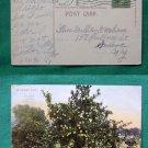 1911 LEMON TREE EARLY VIEW OLD VINTAGE STAMP POSTCARD