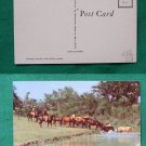 COWBOY DUDE LEADING HORSE TO STREAM VINTAGE POSTCARD