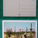 ARIZONA DESERT CACTUS IN SPRING TIME VINTAGE POSTCARD