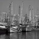 Black and White Photo 8X10 Fishing Boats Bayou La Batre