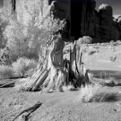 Black and White Photo 8X10 Lonely Tree Stump Monument Valley