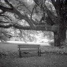 Black and White Photo 8X10 Bench at Meadowbank Farm Alabama