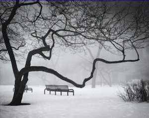Black and White Photo 8X10 Park Benches In The Snow In Chicago