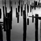Black and White Photo 8X10 Piles in Fog 1968