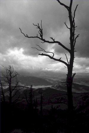 Black and White Photo 8X12 Yellowstone On Bighorn Peak