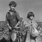Depression Era Photo 8X10 Children and Sugar Beets