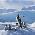 Emperor Penguin Parent Chicks 20X30 Poster Art Print