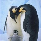 Emperor Penguins with Chick 12X18 Photograph