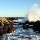 Acadia National Park Ship Harbor Wave 8X10 Photograph
