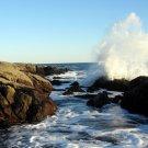 Acadia National Park Ship Harbor Wave 12x16 Canvas