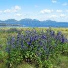 Acadia National Park Summer Island View 8X10 Photograph