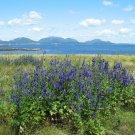 Acadia National Park Summer Island View 12x16 Canvas