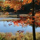 Acadia National Park Fall Changing Leaves 11x14 Photograph