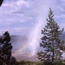 Yellowstone National Park Lone Pine Geyser 8X10 Photograph